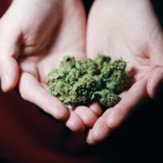 Is Marijuana Addictive? Abuse vs. Dependence